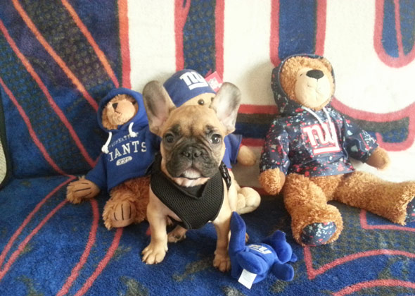17 Dogs and Cats Who Are Ready for NFL Football  apzPFX5u