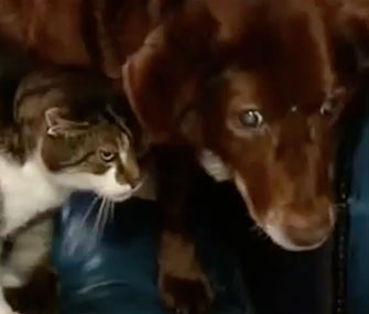 Pwditat is a guide cat for blind dog Terfel.