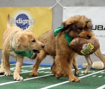 Puppy Bowl XII
