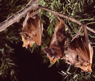 bats hanging upside down