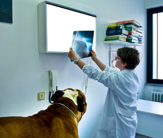 Vet checking xray