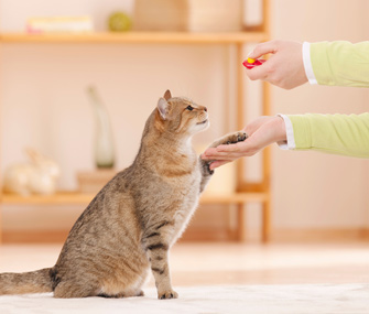 Clicker training a cat