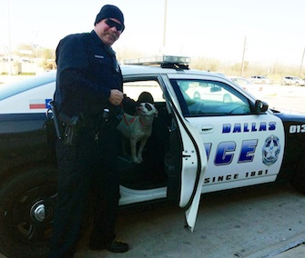 Laurel looks lovingly at Dallas Police Officer John Rogers, who rescued her from a busy highway.