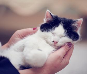 Content Cat
