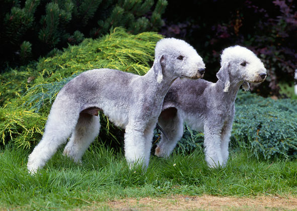 Amazing and Unusual Dog Breeds Unique Looking Dog Breeds