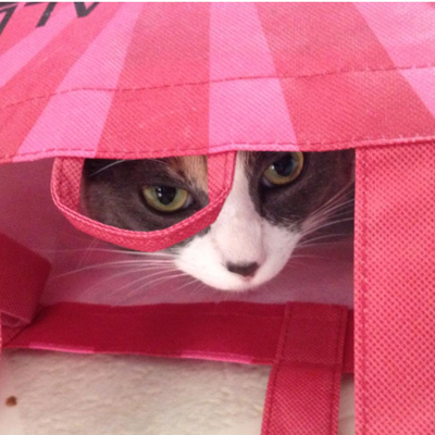 Hide and Seek Cat in Pink Bag