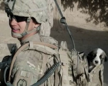 Soldier reunited with dog Smoke