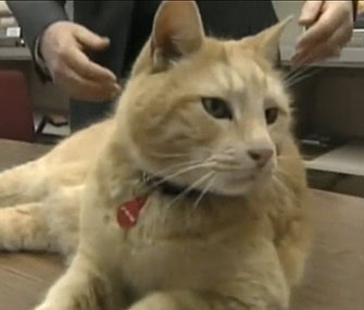 Simba spends his days at a Maine high school.