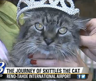 Skittles' owner brought a crown to the airport for her long-lost kitty.
