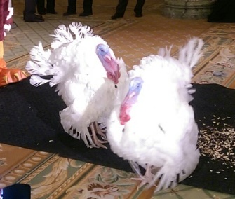 Tater and Tot made a visit to Virginia Tech ahead of their official pardon from the president.