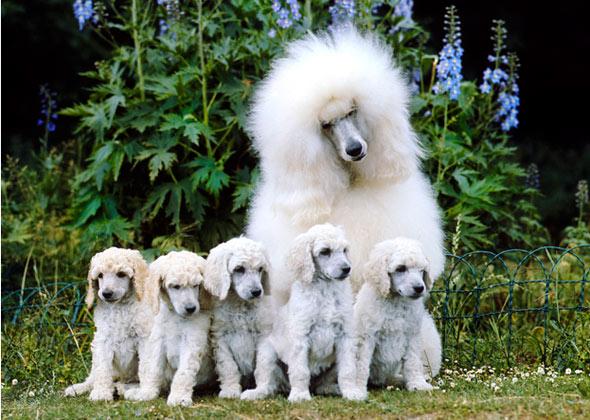 5 Smartest Dog Breeds Chosen By Veterinary Professionals