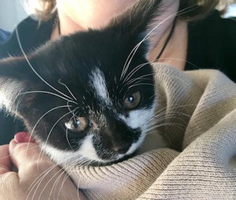 A kitten is named Fender for the spot where he was found in a woman's car.