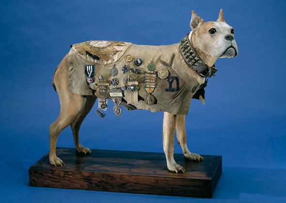 A Fascinating History Of Military Dog Breeds Photo Gallery