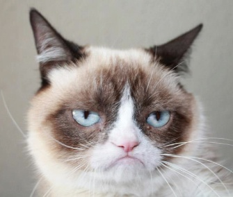 Grumpy cat has landed her own movie deal.