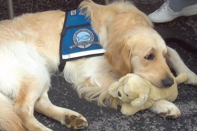 Moses Comfort Dog cuddles with his stuffed animal puppy