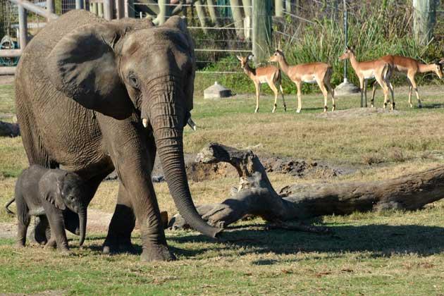 baby elephant at zoo