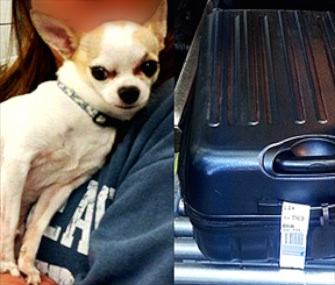 A Chihuahua is now safely back home after being found by the TSA in his owner's suitcase.
