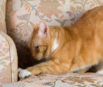 Cat Clawing at Furniture