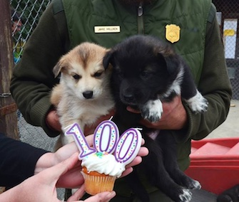 Cupcake and Party wish the National Park Service a happy 100th birthday.