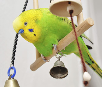 Bird with bell toys