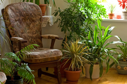 Indoor plants and chair