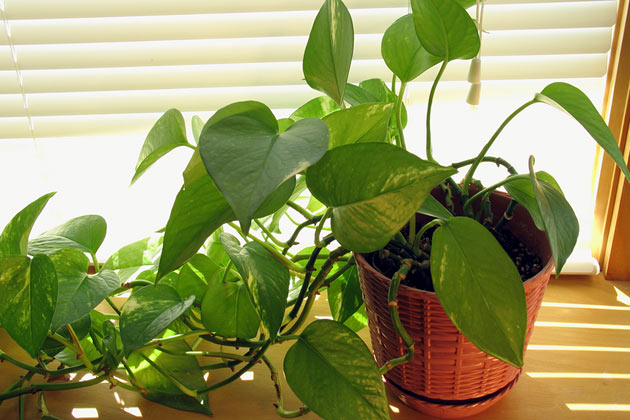 10 Household Plants That Are Dangerous to Dogs and Cats on safe indoor plants for cats, safe outdoor plants for cats, safe herbs for cats, safe vines for cats, safe food for cats,
