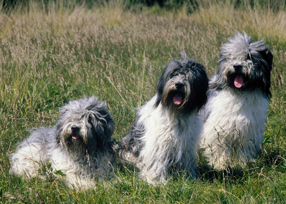 Dog Breed Names You're Probably Mispronouncing