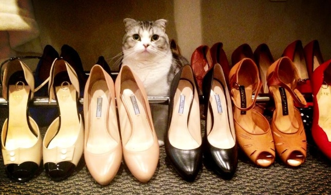 Taylor Swift Tweets a picture of her cat, Meredith, sitting among her shoes.