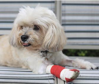 Dog wearing bandage on leg