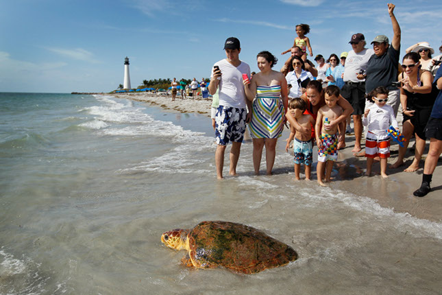 Sea Turtle Crowd