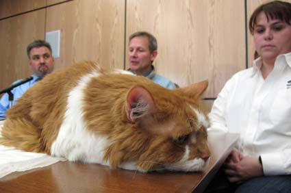 Cat on table at news conference