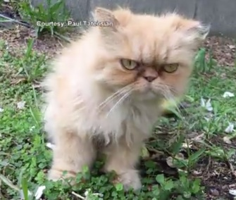 A home inspector came to the rescue of a grumpy-looking kitten he found during an inspection.
