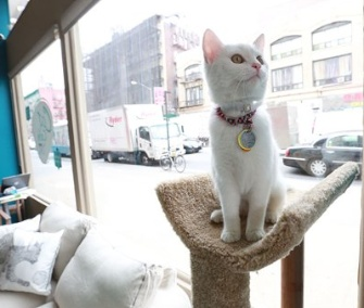 A cat sits in the window at New York's pop-up Cat Cafe.