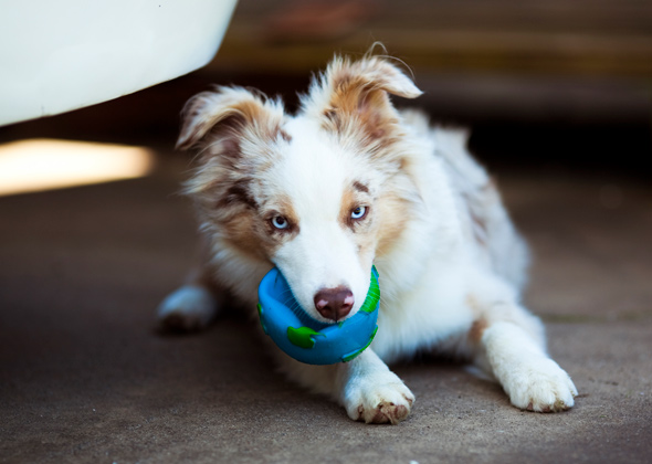 Downward Dog: Least Trendy Male and Female Dog Names of the Year