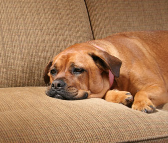 Everything You Need to Know About Coronavirus in Dogs