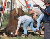 Horse rescued from sinkhole