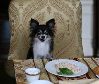 dog eating at dining table