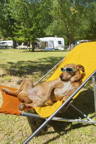 Dog lounging in a chair at campground.