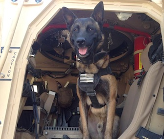 A soldier posted this photo of military working dog Lion in Afghanistan to Photo Doggies for Anthony on Facebook.