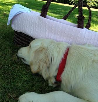 Jimmy Fallon's puppy, Gary