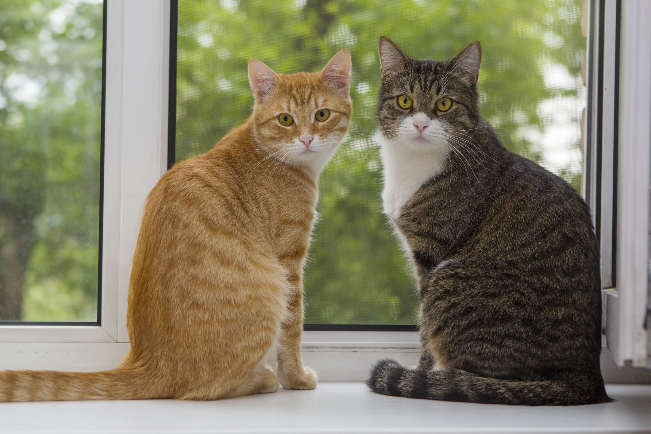 5 Litterbox Mistakes You Could Be Making