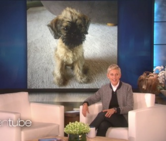 "Ellen DeGeneres introduced her fans to her new ""Kid,"" a 9-week-old puppy."