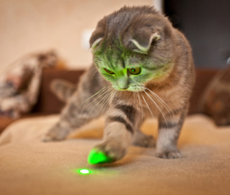 Cat Playing With Laser Pointer