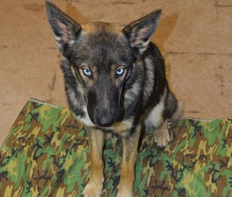 Luna was feared lost at sea before she was found on San Clemente Island in the Pacific.