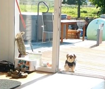Dog Thinks Glass Door Is Closed Video