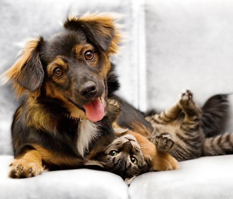 Puppy and kitten playing on the couch