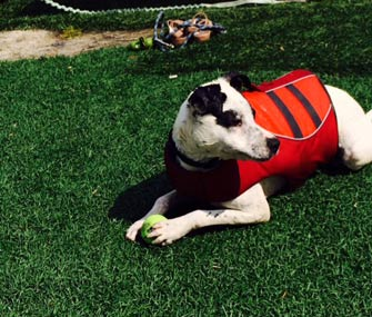 Hank in Life Jacket