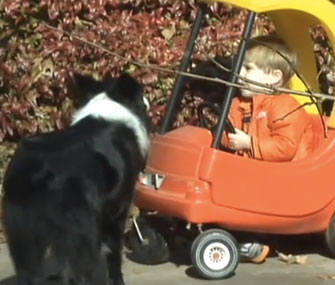 Ashepoo, an Australian Shepherd, stayed by Peyton Myrick's side while he was missing in the woods.