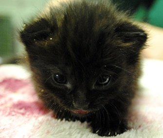 A 4-week-old kitten was found in a box on a London Underground train.