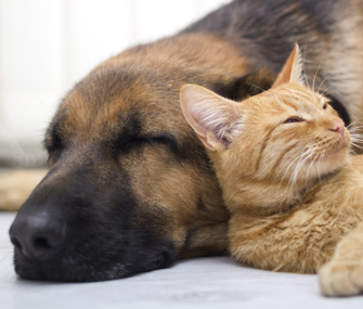 Cat and dog lying on each other